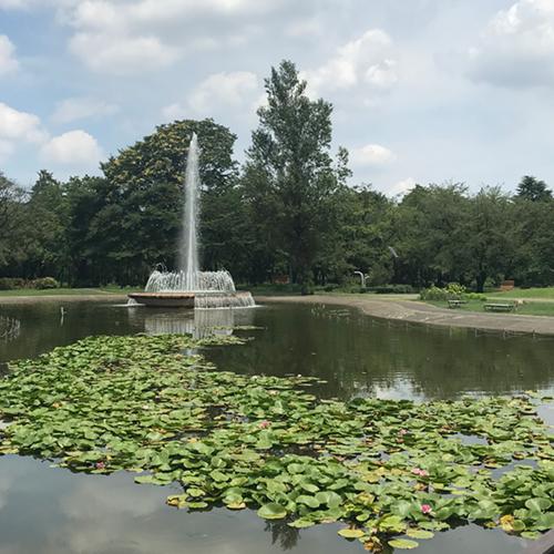 彩の森入間公園 噴水