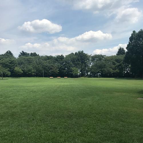 彩の森入間公園 広い芝生